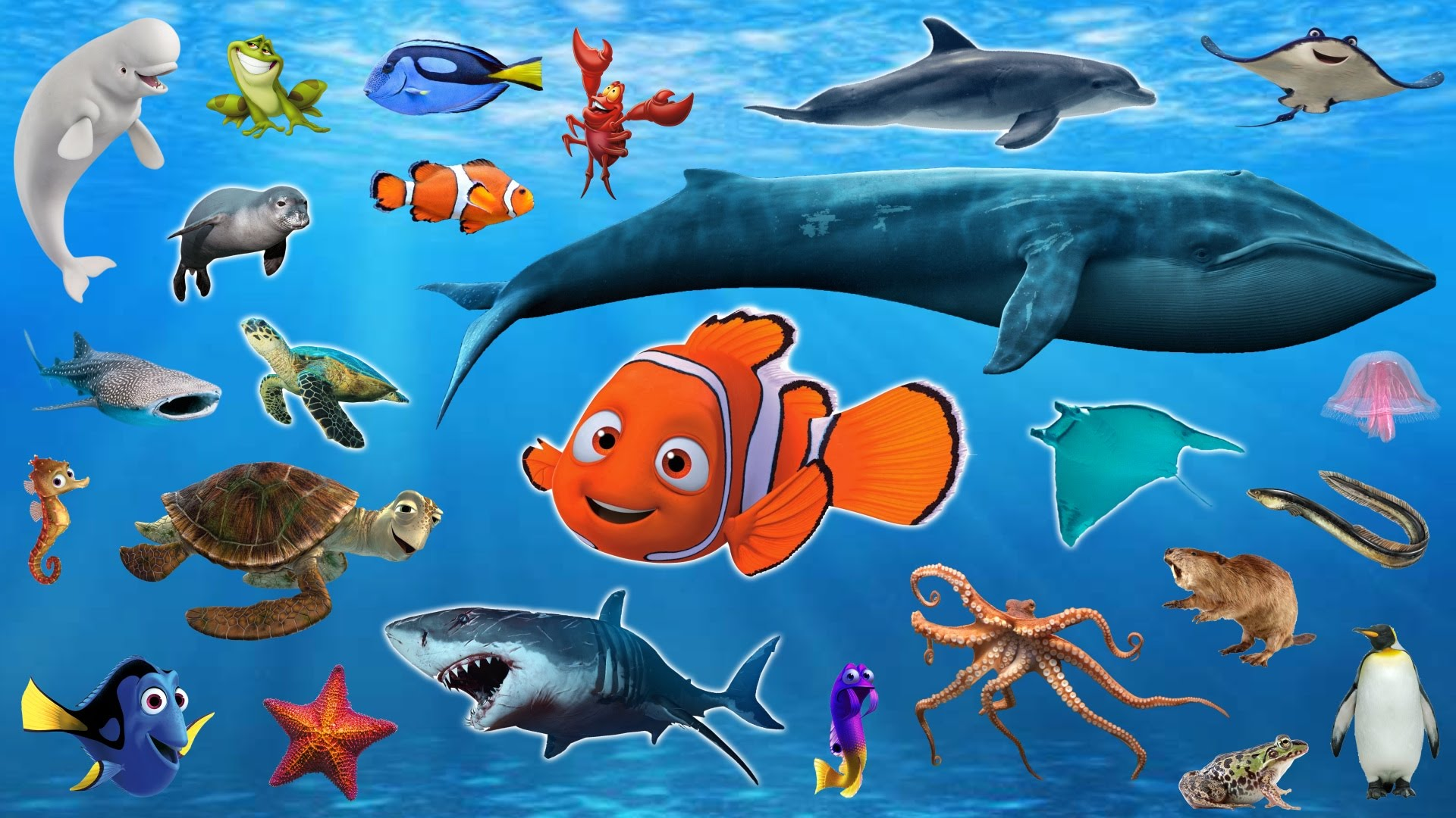 Learn Sea Animals + Water Animals Names and sounds ...