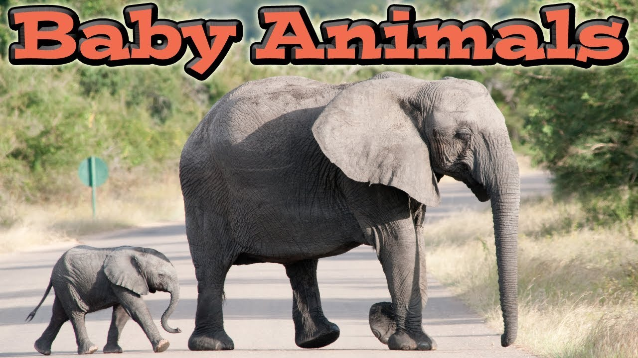 National Geographic Kids Look and Learn: Baby Animals ...