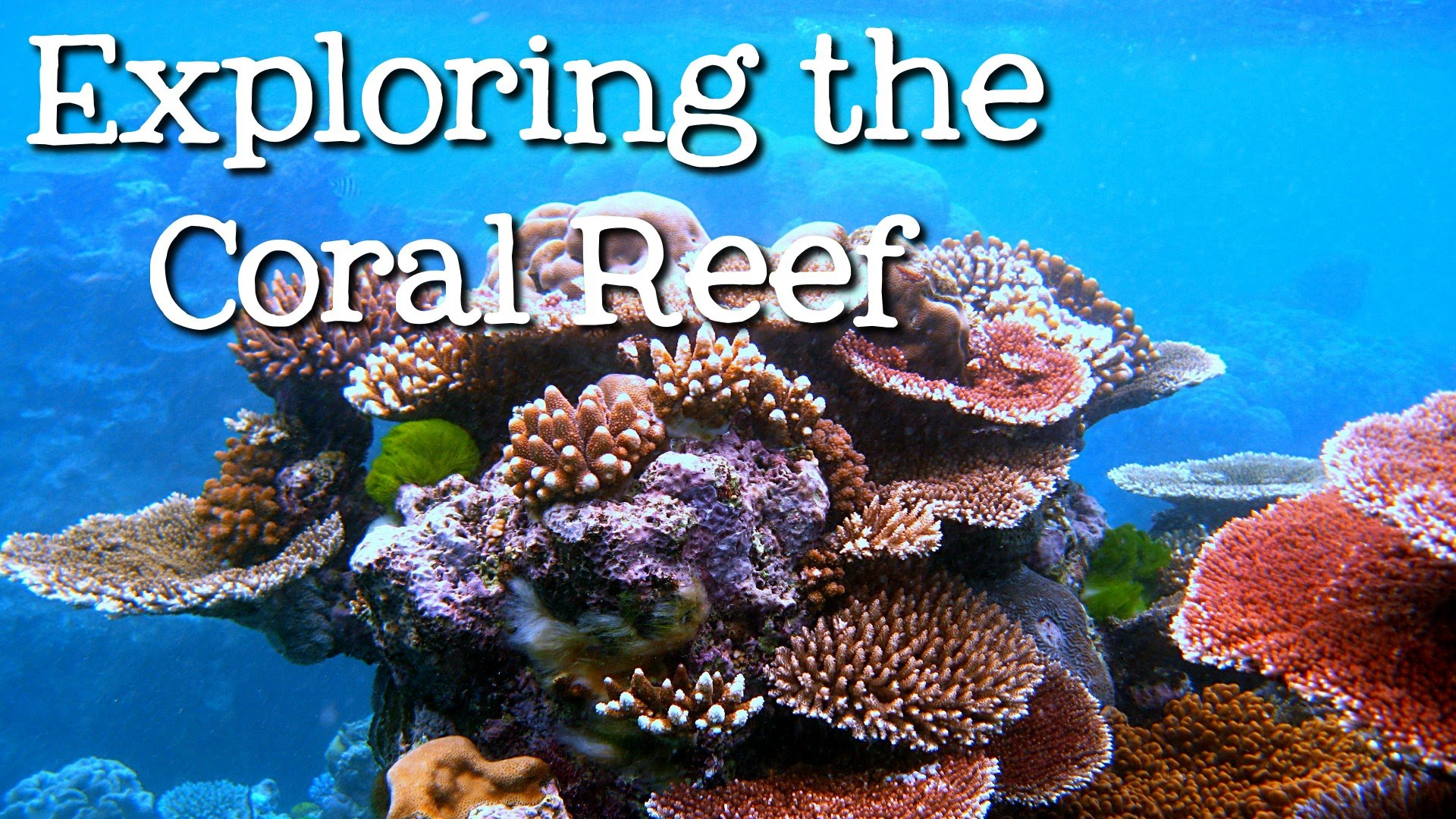 Coral Reefs Drawings For Kids